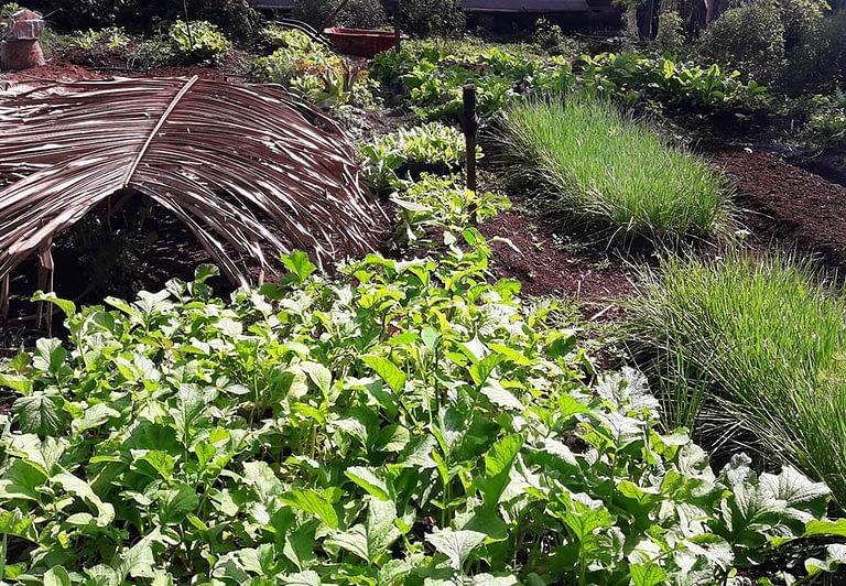 finca ixobel eco hotel poptun peten guatemala garden
